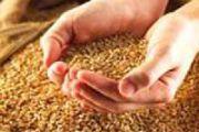 С заботой о семенах